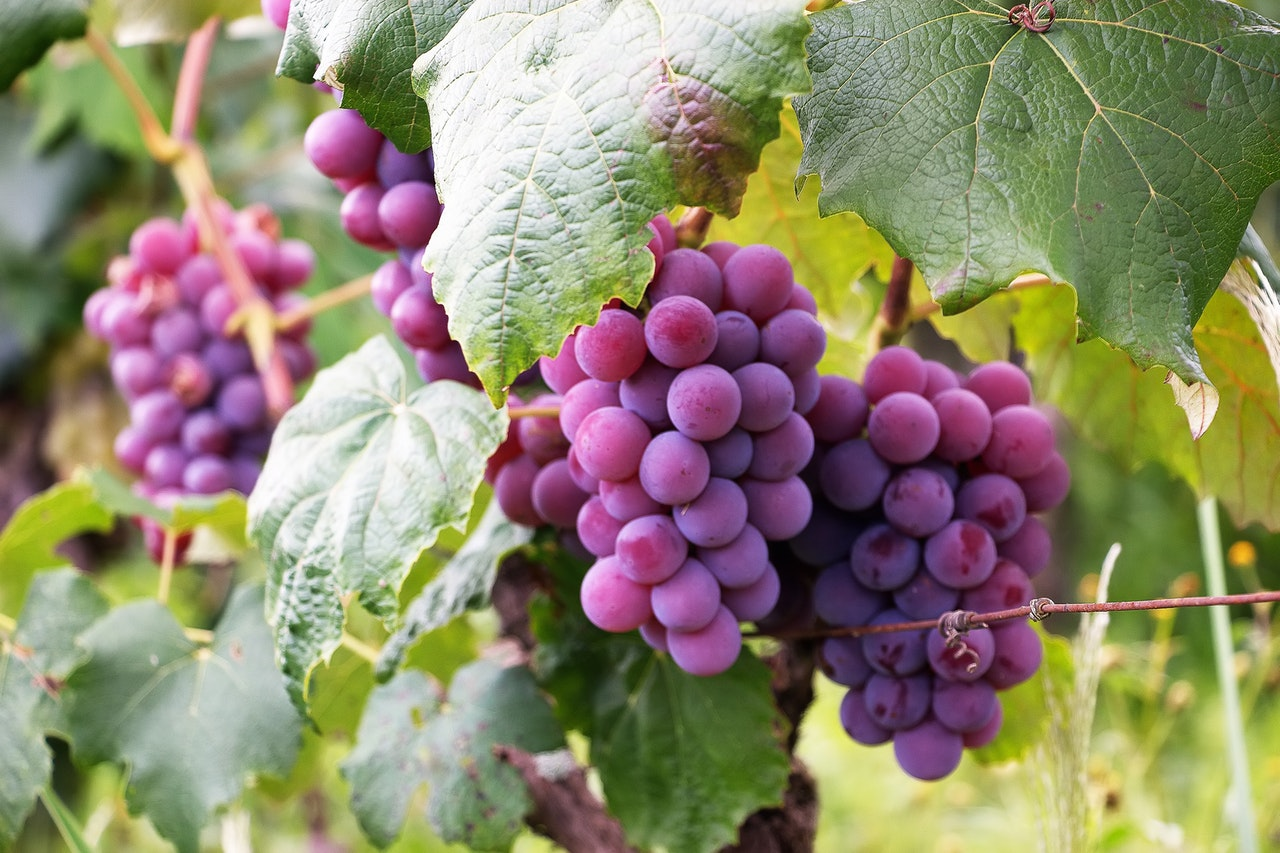 Purple grapes took the fruits market